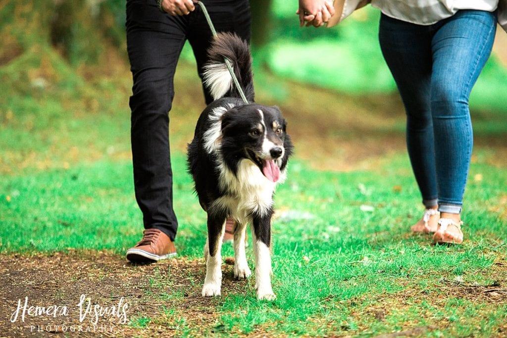 Drumlanrig Castle Dumfries Engagement shoot dog