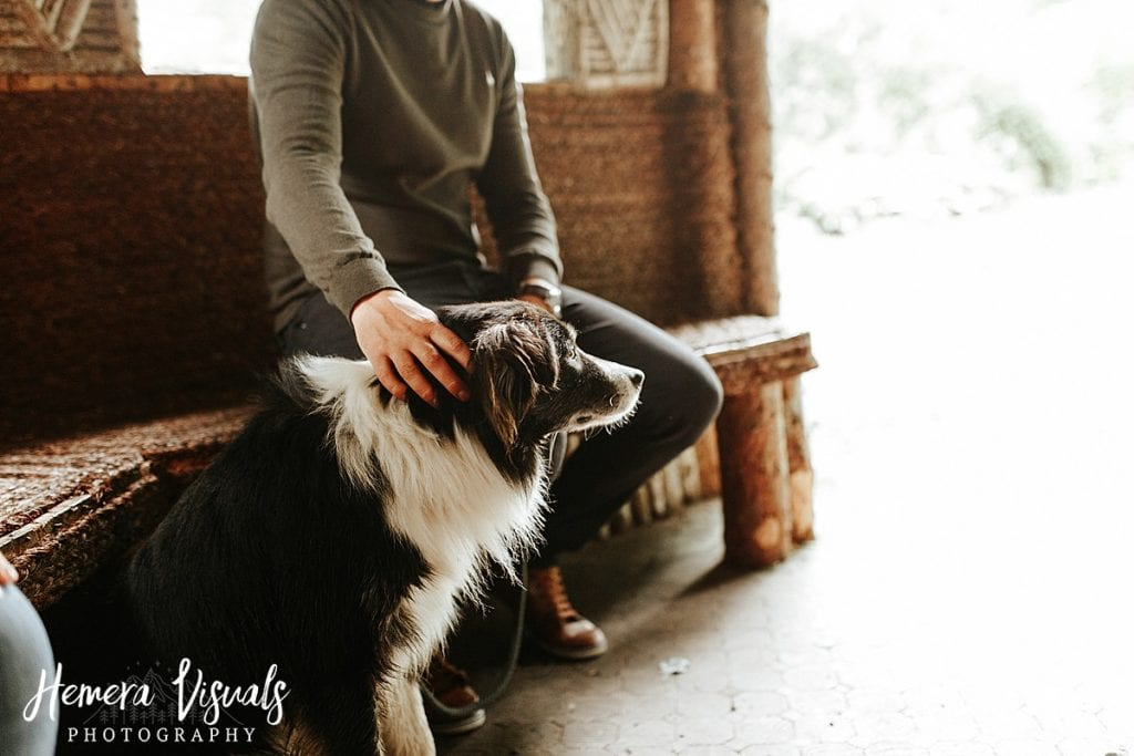 Drumlanrig castle Border Collie Engagement